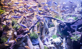 Akwarium Obrazy Royalty Free
