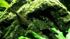 akwarium czarny rysunku ryba linia biel zbiory