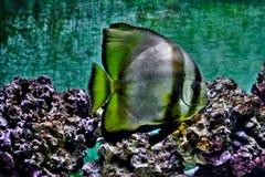 akwarium czarny rysunku ryba linia biel Obrazy Royalty Free