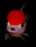 akwarium czarny rysunku ryba linia biel Fotografia Royalty Free