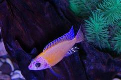 akwarium czarny rysunku ryba linia biel Fotografia Stock