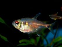akwarium czarny rysunku ryba linia biel zdjęcia stock