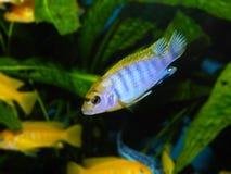 akwarium czarny rysunku ryba linia biel obrazy stock