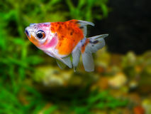akwarium czarny rysunku ryba linia biel zdjęcia royalty free