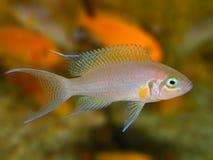 akwarium czarny rysunku ryba linia biel Zdjęcie Royalty Free