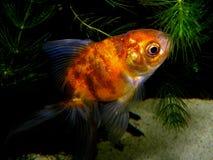 akwarium czarny rysunku ryba linia biel Obraz Royalty Free