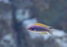 akwarium czarny rysunku ryba linia biel Zdjęcie Stock