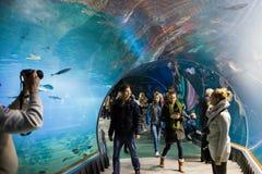 Akwarium na nowożytnym zoo stylizował Afryka Obraz Royalty Free