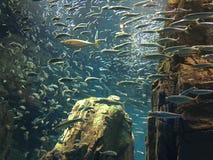 Akwarium Osaka Obrazy Royalty Free