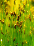 Akwarium roślina fotografia stock