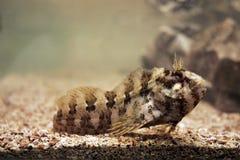 akwarium ryb obrazy royalty free