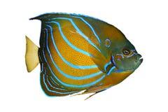akwarium ryb Zdjęcia Royalty Free