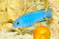 akwarium ryba Zdjęcia Royalty Free