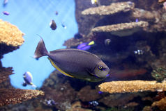 akwarium ryba Obraz Stock