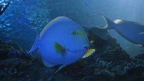 Akwarium, Rybi zbiornik, rafa koralowa, zwierzęta, natura zbiory