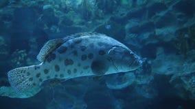 Akwarium, Rybi zbiornik, rafa koralowa, zwierzęta, natura zbiory wideo