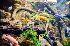 akwarium tropikalne Obraz Stock