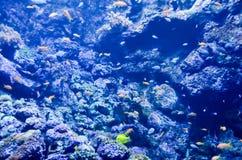 akwarium tropikalne Fotografia Stock