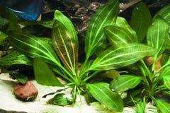 akwarium tropikalny Obrazy Stock