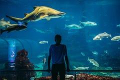Akwarium w Barcelona Obrazy Stock