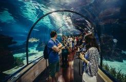 Akwarium w Barcelona Zdjęcia Royalty Free