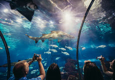 Akwarium w Barcelona Obraz Stock