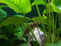 Akwarium w domu natura Zdjęcie Royalty Free