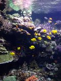 Akwarium w Walencja Obraz Royalty Free