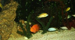 Akwarium z roślinami i skorupami Obrazy Stock