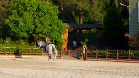 AKYAKA - TURKIJE, MEI 2015: de dressuur, paard toont ruitermeisje, zonsondergang stock videobeelden