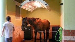 AKYAKA - TURQUIA, EM MAIO DE 2015: Lavagem do cavalo, limpeza, solário video estoque