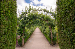 Aléia com árvores Fotos de Stock Royalty Free