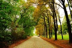 Aléia com as árvores diferentes Imagens de Stock Royalty Free