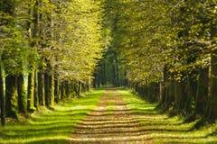 Aléia da árvore Imagem de Stock Royalty Free