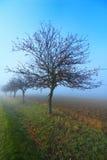 Aléia da árvore de maçã Imagens de Stock Royalty Free