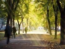 Aléia da cidade da manhã do outono Fotografia de Stock