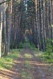 Aléia da floresta Imagem de Stock Royalty Free