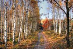 Aléia da floresta Fotografia de Stock Royalty Free