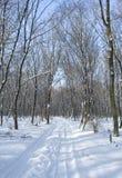 Aléia da floresta do inverno Fotografia de Stock Royalty Free