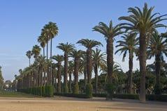 Aléia da palma no parque da cidade Imagem de Stock