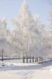Aléia das árvores de vidoeiro do inverno Fotos de Stock Royalty Free