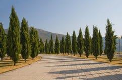 Aléia de Cypress Imagem de Stock Royalty Free