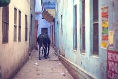 Aléia de Varanasi fotos de stock