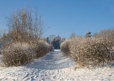 Aléia do inverno Fotografia de Stock Royalty Free