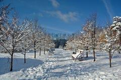 Aléia do inverno das árvores Imagem de Stock Royalty Free