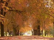 Aléia do parque Imagem de Stock Royalty Free
