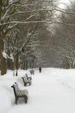 Aléia do parque do inverno Fotografia de Stock Royalty Free