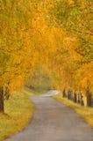 Aléia e estrada bonitas do outono Imagem de Stock Royalty Free