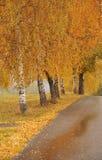 Aléia e estrada bonitas do outono Fotografia de Stock Royalty Free