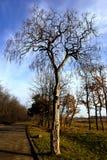Aléia no parque Foto de Stock Royalty Free